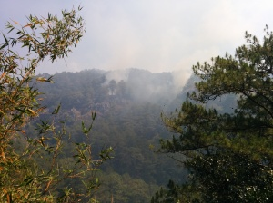 Bosque incendiado