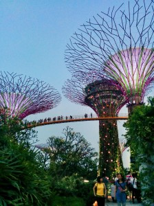 Gardens by the bay III