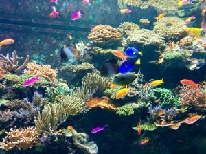 Amigos de Nemo