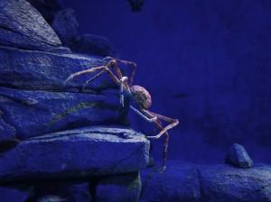 El cangrejo escalador