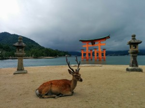 Ciervo descansando frente al gran torii