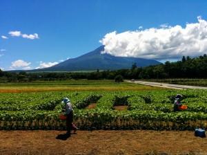 Jardineras trabajando con el volcán de fondo