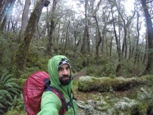 Atravesando el bosque