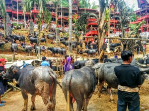 Los búfalos, donaciones en honor a la difunta